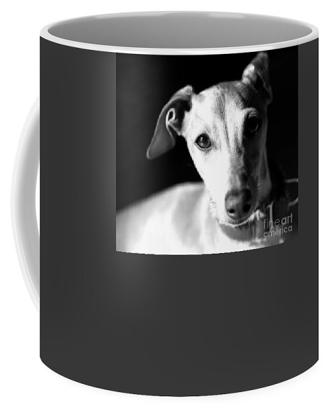 Editorial Coffee Mug featuring the photograph Italian Greyhound Portrait In Black And White by Angela Rath