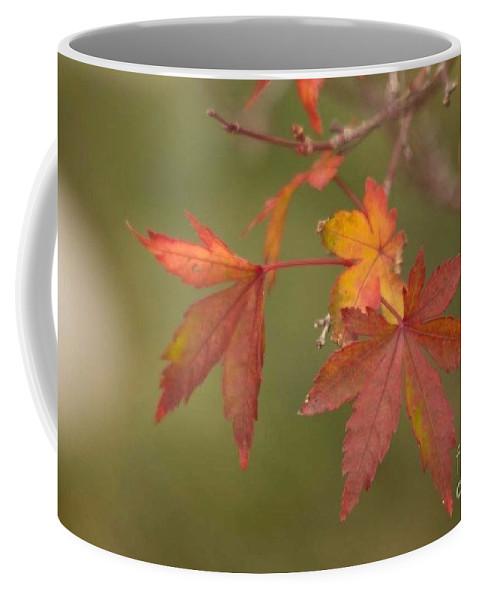 Japanese Maple Coffee Mug featuring the photograph Japanese Maple by Marta Robin Gaughen