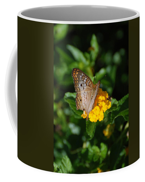 Butterfly Coffee Mug featuring the photograph Landed by Rob Hans