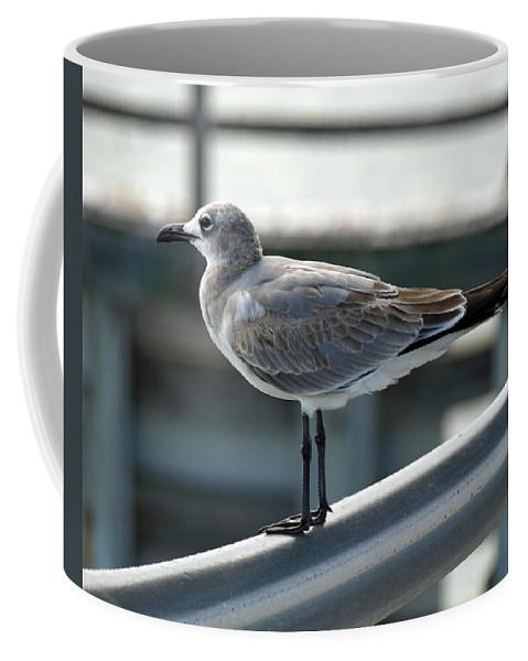 Laughing; Gull; Seagull; Bird; Waterfowl; Seashore; Sebastian; Inlet; Flying; Florida; Larus; Atrici Coffee Mug featuring the photograph Laughing Gull by Allan Hughes