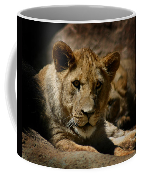 Lion Coffee Mug featuring the photograph Lion Cub by Anthony Jones