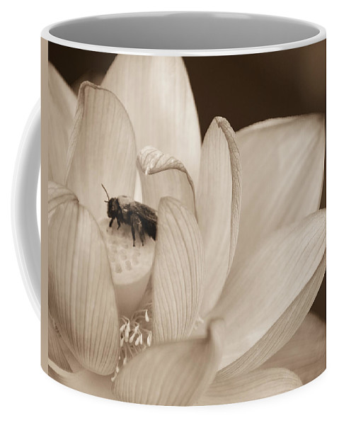 Kenilworth Park & Aquatic Gardens Coffee Mug featuring the photograph Lotus And Friend by Rande Cady