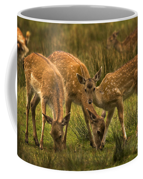 Fallow Deer Coffee Mug featuring the photograph Lunch Time by Angel Ciesniarska