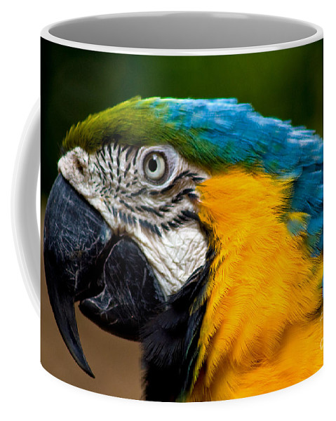 Macaw Coffee Mug featuring the photograph Macaw by Thomas Marchessault
