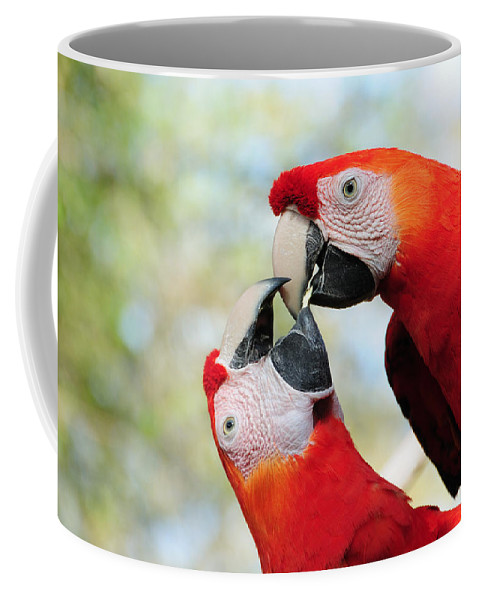 Bird Coffee Mug featuring the photograph Macaws by Steven Sparks