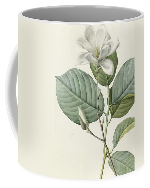 Magnolia Coffee Mug featuring the painting Magnolia by Pierre Joseph Redoute