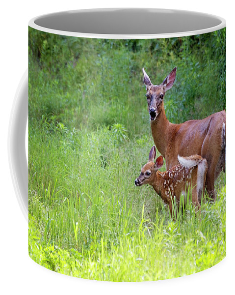 Maine Wildlife Coffee Mug featuring the photograph Maine White Tailed Deer by Sharon Fiedler
