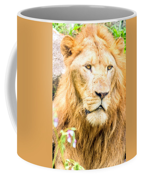 Animal Coffee Mug featuring the photograph Majestic Lion by Jijo George