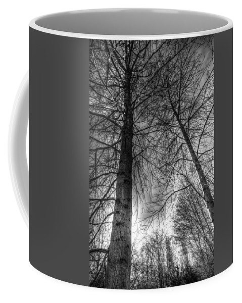 Trees Coffee Mug featuring the photograph Majestic Trees by David Pyatt