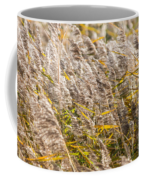Rainham Marshes Marsh Reeds Reed Nature Reserve Uk Britain British England English London Europe European Wild Urban Landscape View Wildlife Natural Environment Wetland Marshland Flora Plants Bulrush Vegetation Season Seasonal Fall Autumn Swamp Ecology Habitat Wilderness Centre Center Countryside Rural Texture Background Grass Marshland Green Coffee Mug featuring the photograph Marshes 2 by Marcin Rogozinski