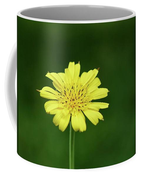 Jouko Lehto Coffee Mug featuring the photograph Meadow Salsify by Jouko Lehto
