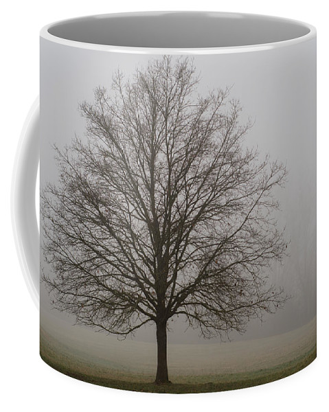 Winterpacht Coffee Mug featuring the photograph Morning Fog by Miguel Winterpacht