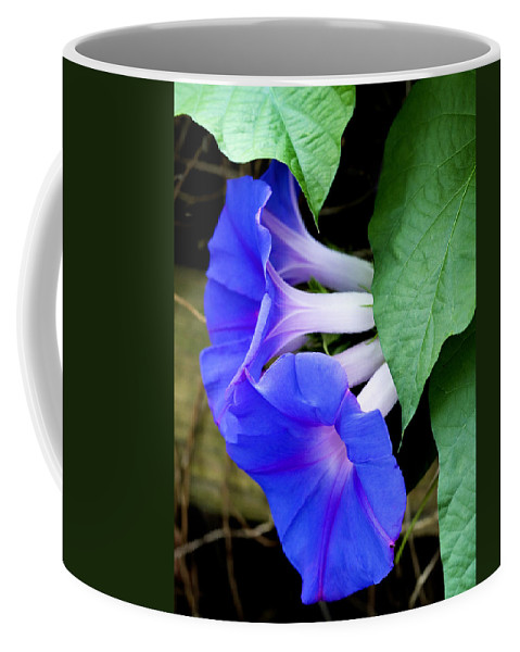 Morning Glory Coffee Mug featuring the photograph Morning Glory by Marilyn Hunt