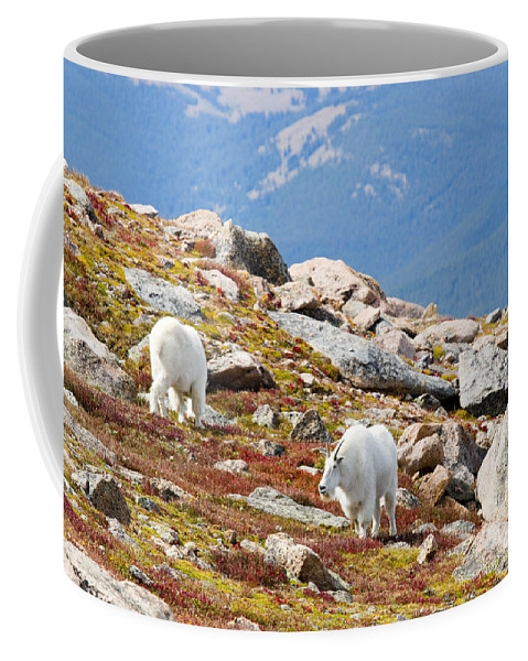 Goat Coffee Mug featuring the photograph Mountain Goats On Mount Bierstadt In The Arapahoe National Fores by Steve Krull