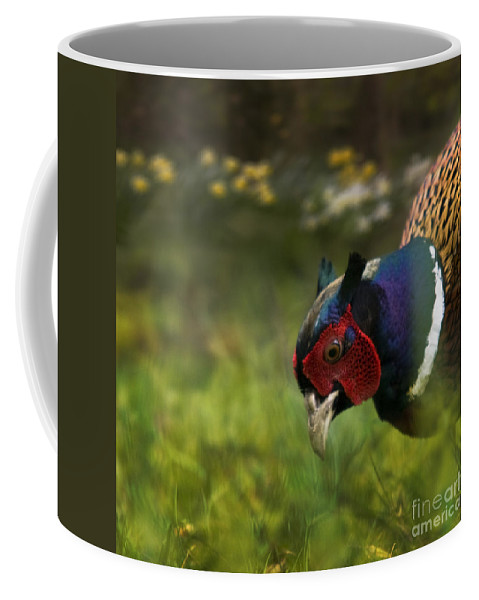 Spring Coffee Mug featuring the photograph Mr Pheasant by Angel Ciesniarska