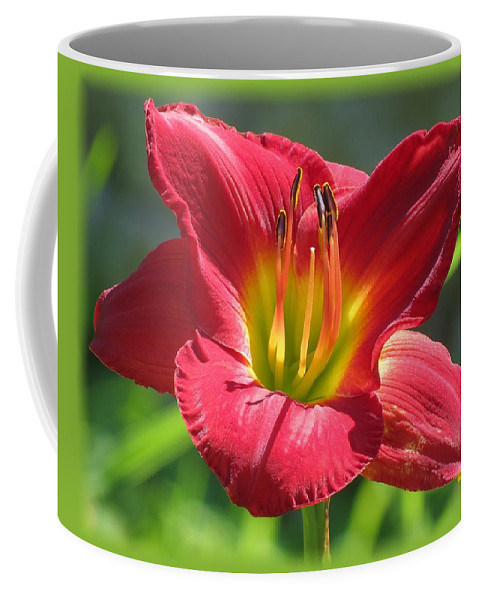 Scarlet Orbit Daylily Coffee Mug featuring the photograph Scarlet Bloom by MTBobbins Photography