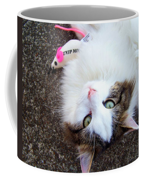 Cat Coffee Mug featuring the photograph My Favorite Toy by Jai Johnson