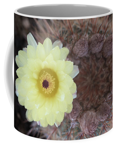 Cactus Coffee Mug featuring the photograph Notocactus Mammulosus Yellow Cactus Flower by Michalakis Ppalis