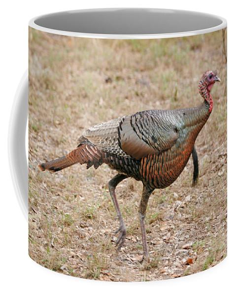 Animals Coffee Mug featuring the photograph Oceola Turkey by John Harmon