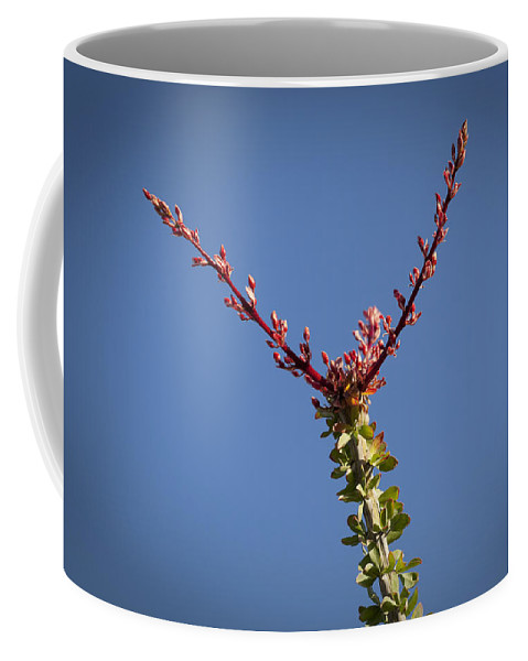 Ocotillo Coffee Mug featuring the photograph Ocotillo Buds by Kelley King