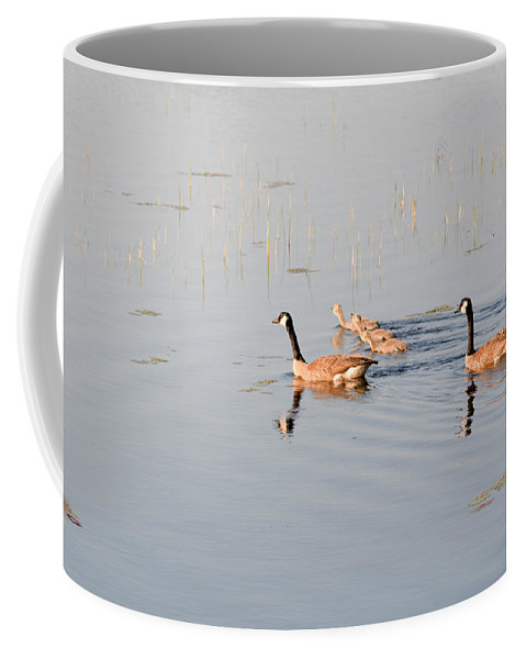 Canadian Geese Coffee Mug featuring the photograph On An Outing by Linda Kerkau