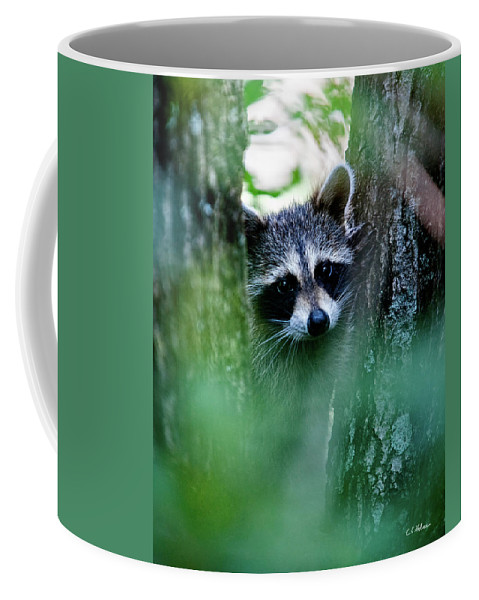 Racoon Coffee Mug featuring the photograph On Watch by Christopher Holmes
