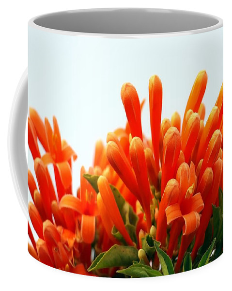 Stamen Coffee Mug featuring the photograph Orange Honeysuckle by Yali Shi