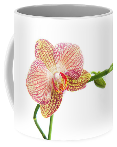 Orchids Coffee Mug featuring the photograph Orchid, Phalaenopsis, Flower by Michalakis Ppalis