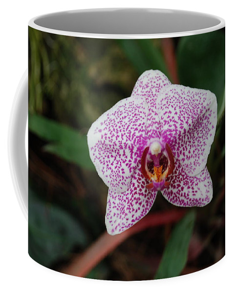Pink Coffee Mug featuring the photograph Orchid by Rob Hans
