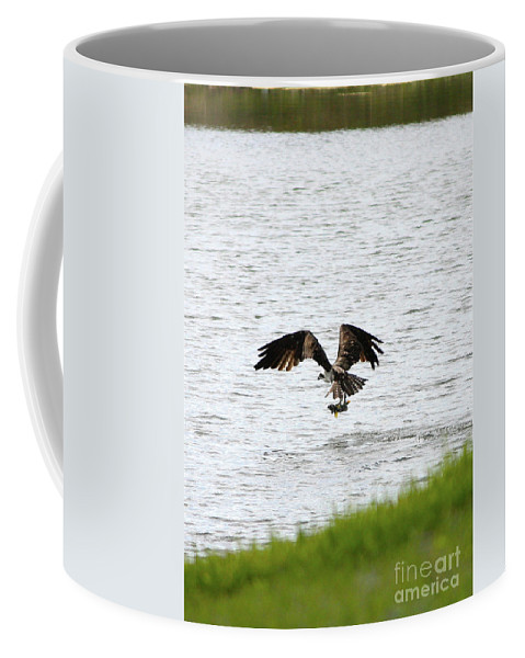 Bird With Fish Coffee Mug featuring the photograph Osprey Fishing In The Afternoon by Carol Groenen