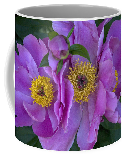 Flowers Coffee Mug featuring the photograph Peonies by Jessica Wakefield