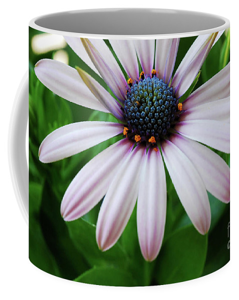Daisy Coffee Mug featuring the photograph Pink African Daisy by Nancy Mueller