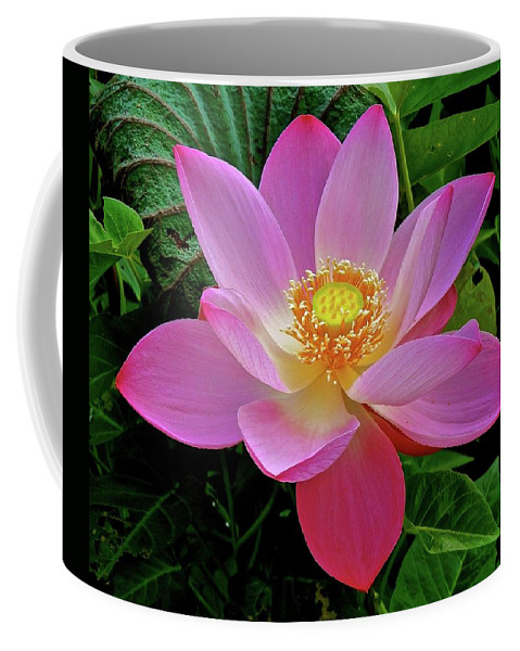 Lotus Coffee Mug featuring the photograph Pink Blooming Lotus by Joe Wyman