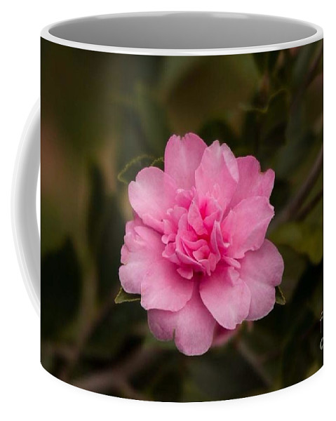 Pink Camellia Coffee Mug featuring the photograph Pink Camellia by Marta Robin Gaughen