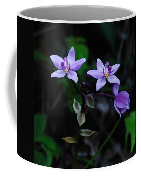 Spathoglottis Plicata Coffee Mug featuring the photograph Purple Orchids 2 by Michael Peychich