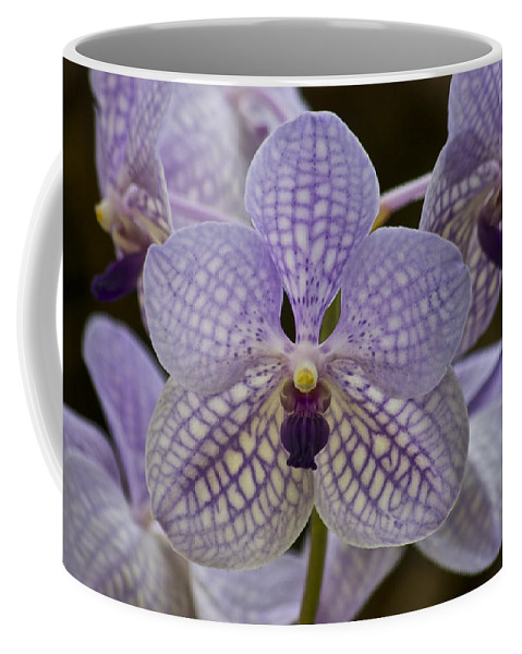 Purple Orchids Coffee Mug featuring the photograph Purple Orchids by Michael Peychich