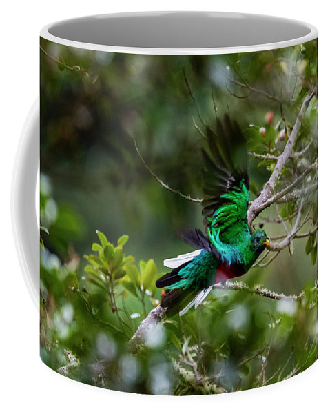 Costa Rica Trip Coffee Mug featuring the pyrography Quetzal In Costa Rica by Yoshiki Nakamura