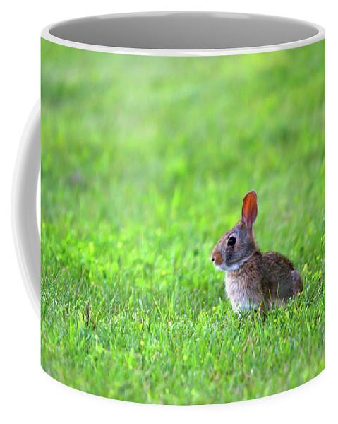 Rabbit Coffee Mug featuring the photograph Rabbit by Linda Kerkau