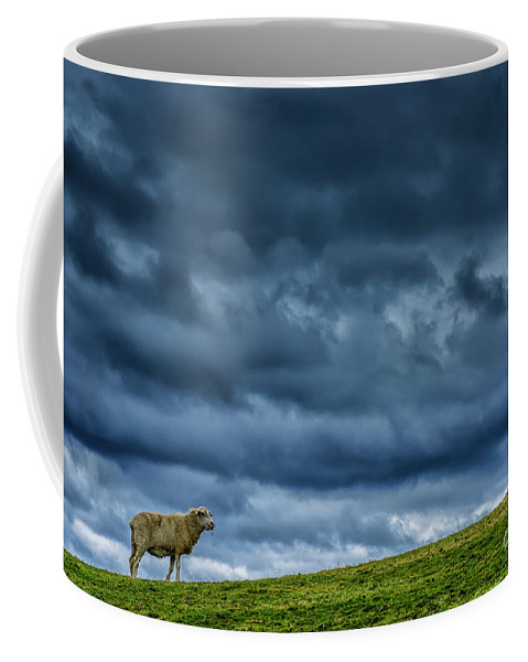 Lamd Coffee Mug featuring the photograph Rain Storm Ewe And Lamb by Thomas R Fletcher