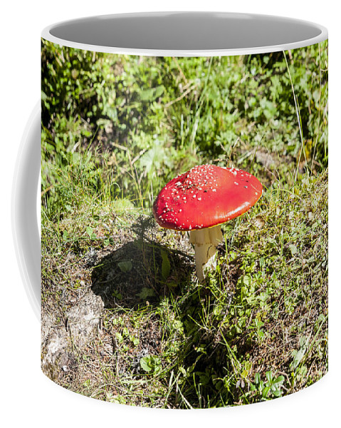 Mushroom Coffee Mug featuring the photograph Red And White Potted Toadstool by Ilan Rosen