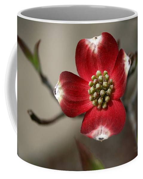 Flower Coffee Mug featuring the photograph Red Dogwood by Andrei Shliakhau