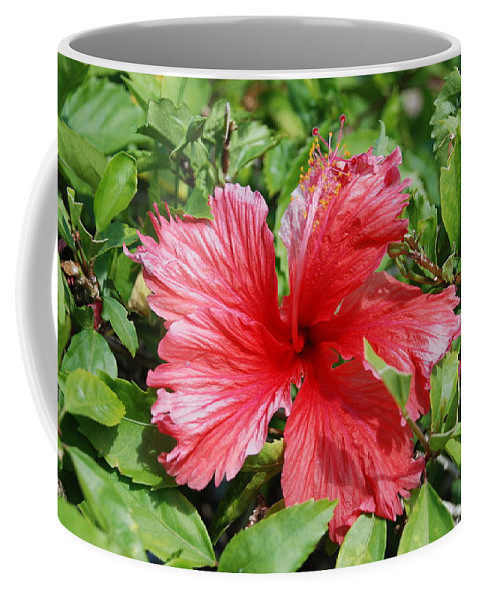 Red Coffee Mug featuring the photograph RED by Rob Hans
