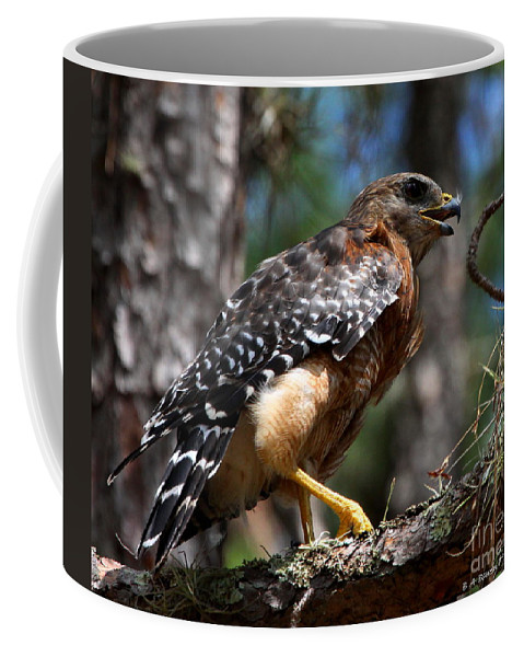 Red Shouldered Hawk Coffee Mug featuring the photograph Red Shouldered Hawk by Barbara Bowen