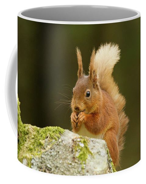 Wildlife Coffee Mug featuring the photograph Red Squirrel by Trevor Clifford