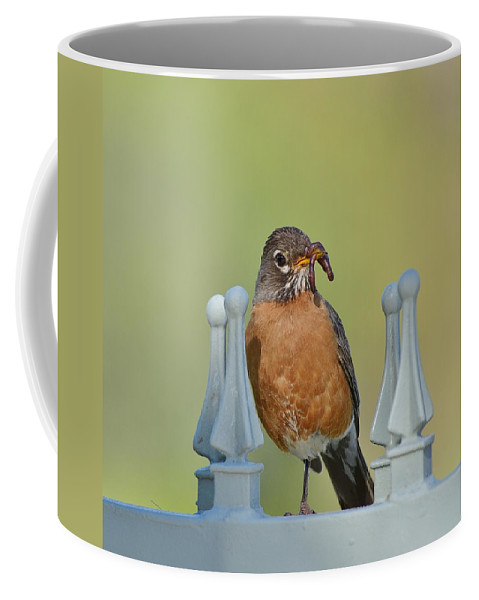 Linda Brody Coffee Mug featuring the photograph Robin With Worm I by Linda Brody