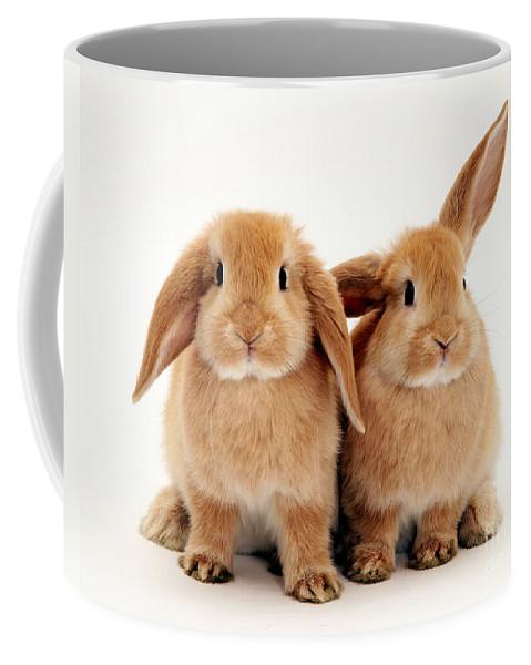Animal Coffee Mug featuring the photograph Sandy Lop Rabbits by Jane Burton