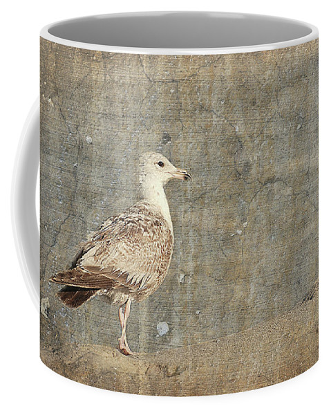 Jersey Shore Coffee Mug featuring the photograph Seagull - Jersey Shore by Angie Tirado