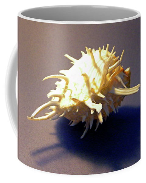 Frank Wilson Coffee Mug featuring the photograph Seashell Spondylus Americanus by Frank Wilson