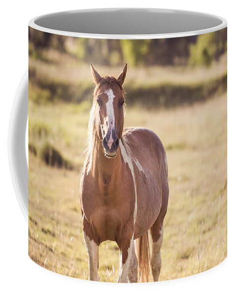 Animal Coffee Mug featuring the photograph Single Horse by Rob D