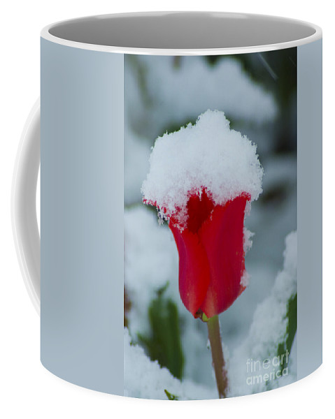 Tulip Coffee Mug featuring the photograph Snowy Red Riding Hood by Louise Magno
